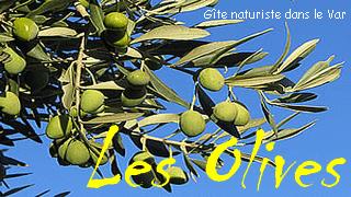 Logo Les Olives Nat
